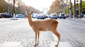 Humans Make Wild Animals Less Wary