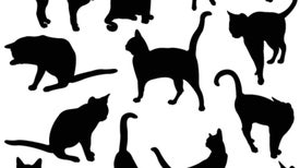 Psychologists: Getting Liberals to Agree Really Is Like Herding Cats