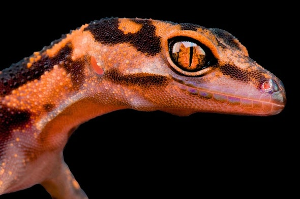 Online Reptile Trade Is a Free-for-All That Threatens Thousands of Species