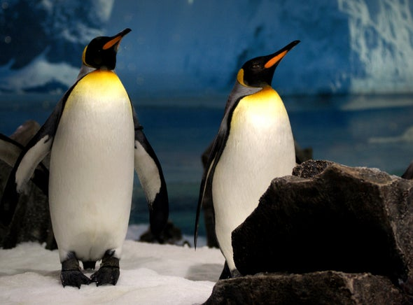Antarctica's Iconic King Penguins May Have to Move South