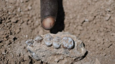 "New Human Ancestor Discovered Near Fossil of ""Lucy"""