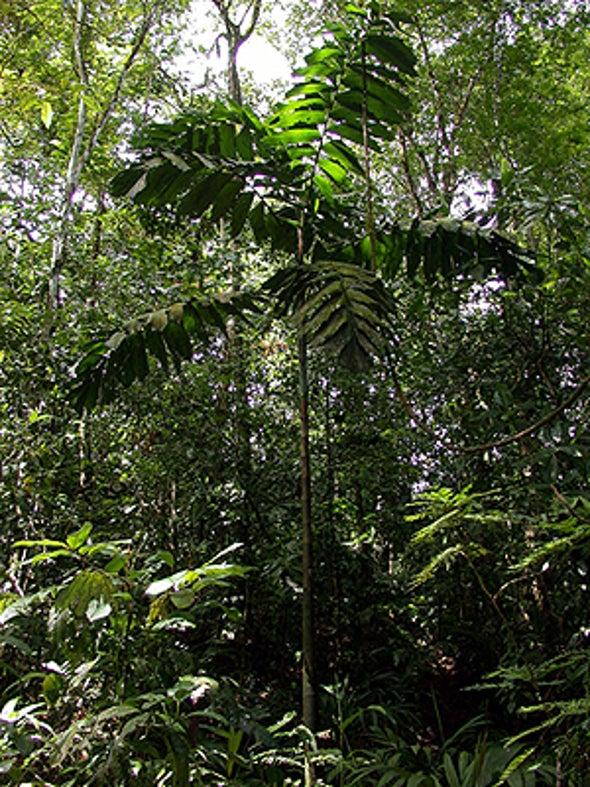 Forest Homogeneity