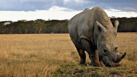 Plan to Fly Rhinos to Australia Comes under Fire