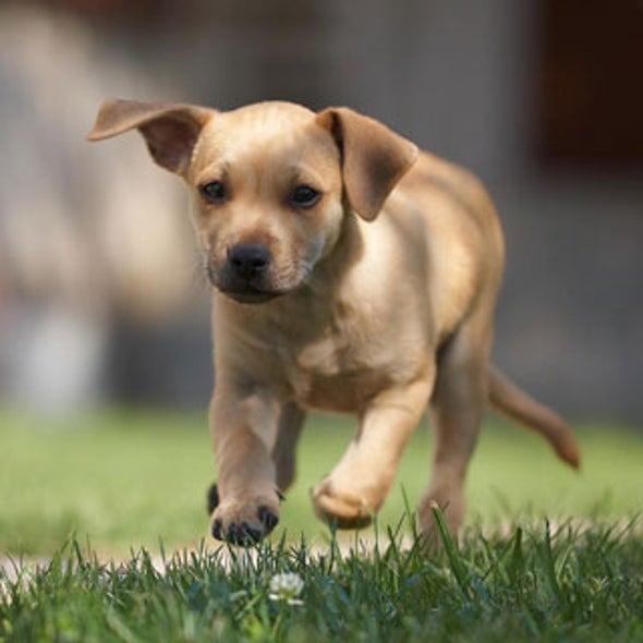 Veterinarians Unleash Probiotics to Ease Doggie Discomfort