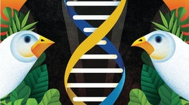 Darwin's Ideas on Evolution Drive a Radical New Approach to Cancer Drug Use