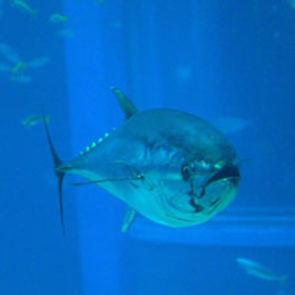 Good Riddance to Overfishing: New Management Can End Unsustainable Practices
