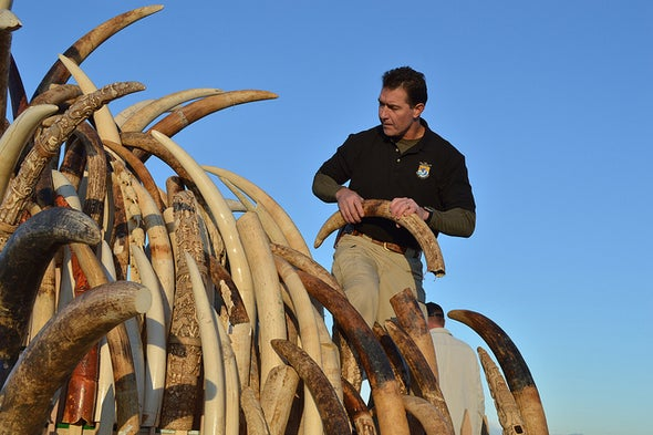 U.S. to Crush a Ton of Poached Ivory in Times Square