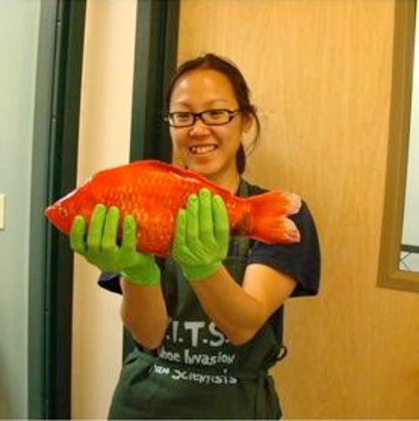 Monster Goldfish Found in Lake Tahoe
