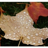 Weather, Water & Climate: Raindrops on a leaf