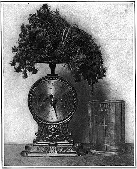 American Scientist Magazine Subscription: Medical Technology, 1915 [Slideshow]