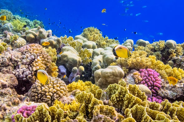 We Can Save Earth's Coral Reefs