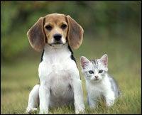 beagle-and-kitten
