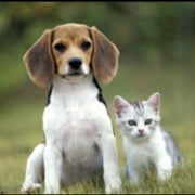 Fact or Fiction?: Pets Protect Children against Allergies