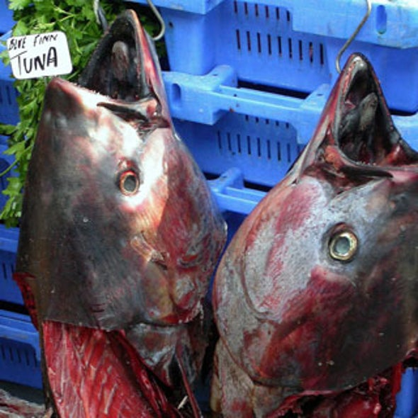 Study Links Air Pollution and Poisoned Seafood