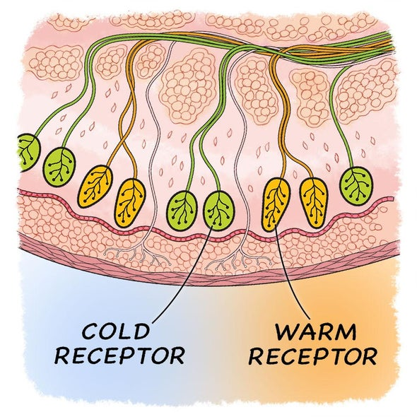 Cold or Warm, Can We Really Tell? - Scientific American