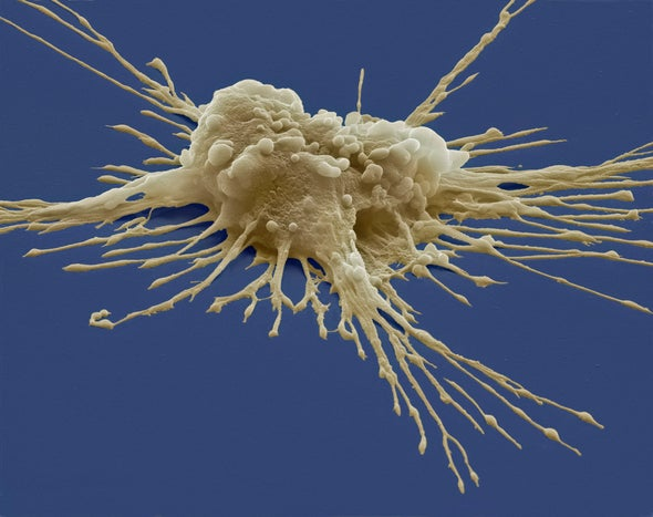 Lab-Grown Blood Stem Cells Produced at Last