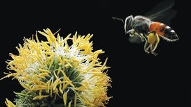 The Irreplaceable Bee, an Epic Physics Experiment, and Other New Science Books