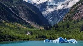 Experts Dispute Trump Administration's Rationale for Alaska Logging