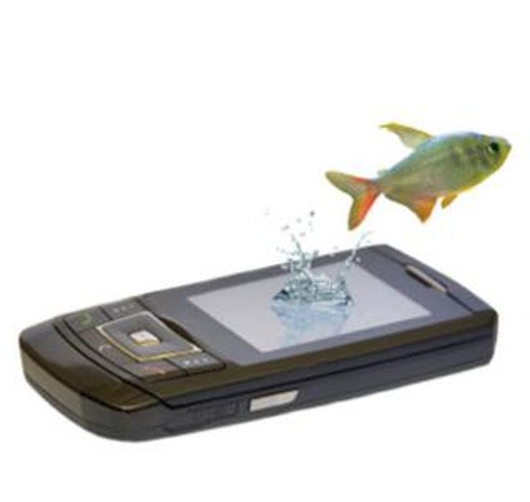 Sustainable fishing at your fingertips: The best fish to buy? Ask your cell phone