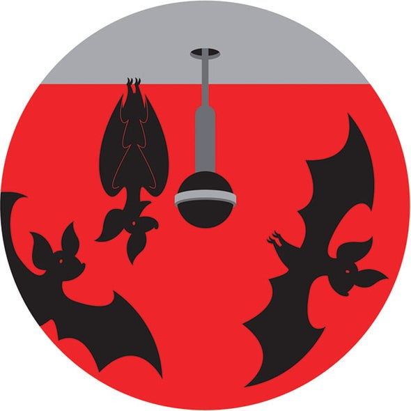 "Bats in New Zealand Set Up ""Time Shares"""