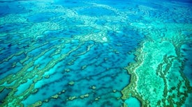 """Recent Ocean Heat Waves Have """"Forever"""" Altered Great Barrier Reef"""