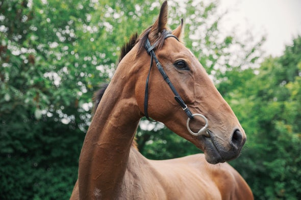Thoroughbred Horses Are Increasingly Inbred