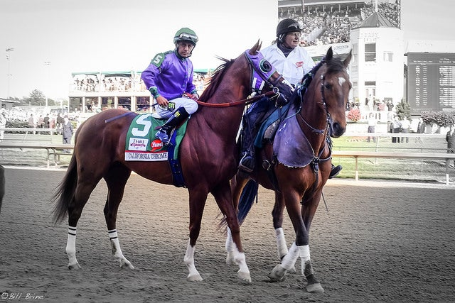 California Chrome's Genes May Be Key to Race for Triple Crown