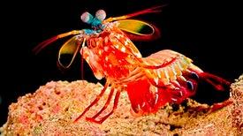 Camera Mimics Mantis Shrimp's Astounding Vision