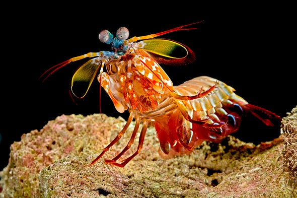 Camera Mimics Mantis Shrimp's Astounding Vision