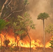 Fire is a frequent and widespread natural disturbance in tropical grassy biomes.