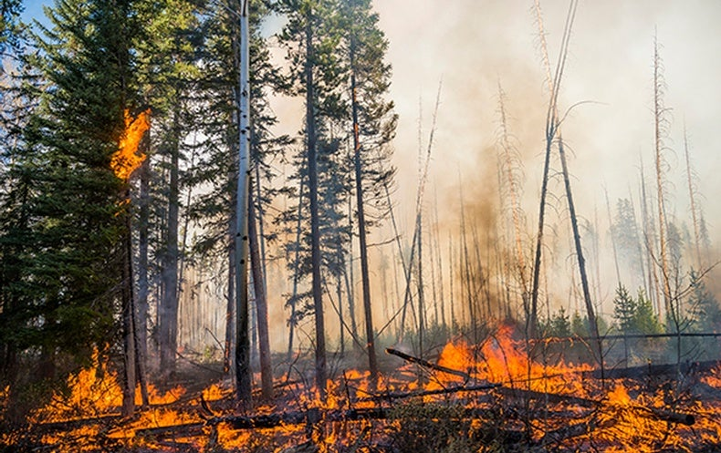Lightning-Caused Fires Rise in Arctic as the Region Warms
