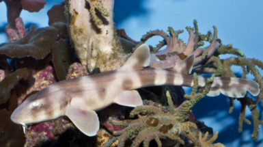Long-Term Sperm: Shark Gives Birth 4 Years after Contact with Male