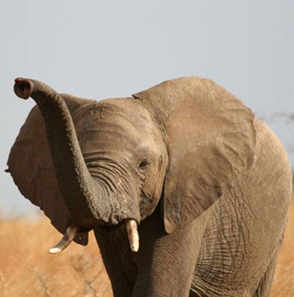 One Quarter of World's Mammals Face Extinction