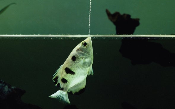 Fishes Use Problem-Solving and Invent Tools