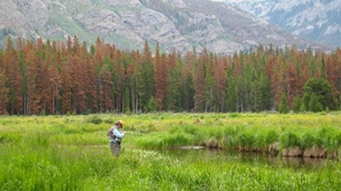 Pine Beetle Outbreaks Increase Groundwater Supply in Rockies