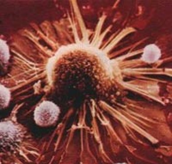 Virus Engineered to Selectively Attack Cancer Cells