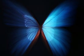 The Quantum Butterfly Noneffect