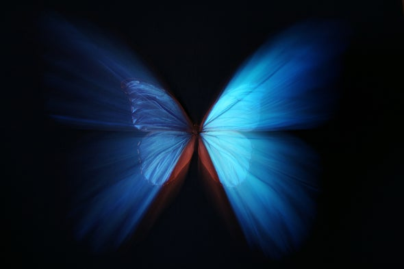 The Quantum Butterfly Non-Effect