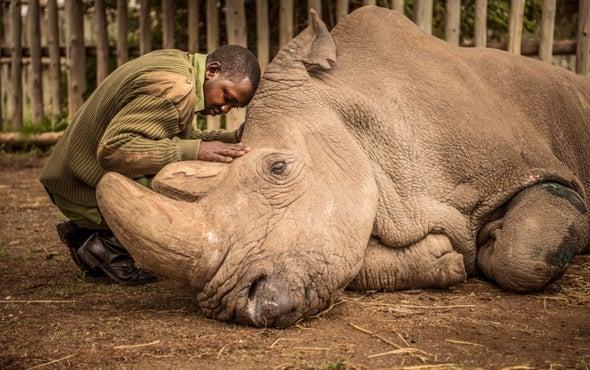 The World Bids Farewell to the Last Male Northern White Rhino