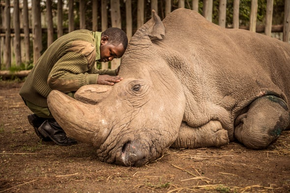 The World Bids Farewell to the Last Male Northern White Rhino