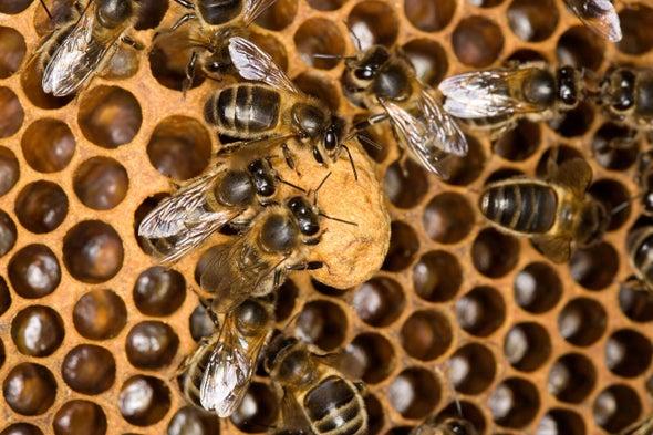 Baby Bees Deprive Caregivers of Sleep