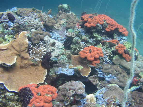 Island Nation Sets Up World's First Crowdfunded Marine Protected Area