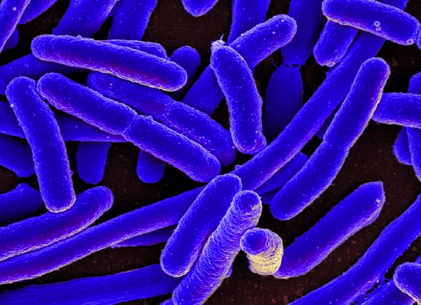 Gut Fungus Suspected in Crohn's Disease