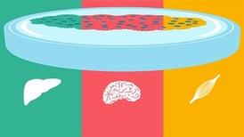 Using Novel Neurons,Scientists Seek to Repair the Brain