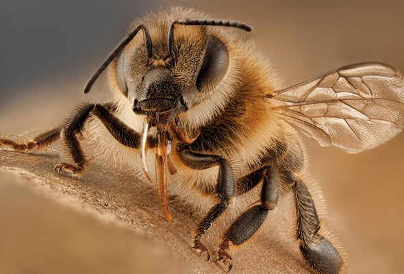 Virus-Infected Bees Practice Social Distancing
