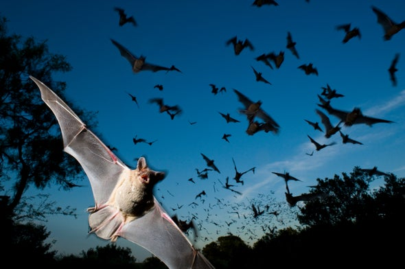Bats Are Migrating Earlier, and It Could Wreak Havoc on Farming