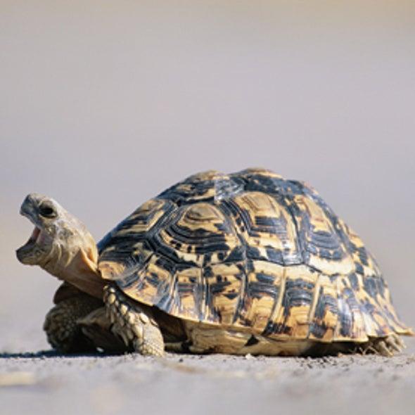 Tortoises Don't Catch Yawns
