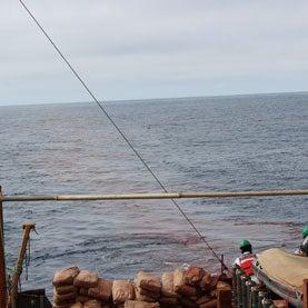Can Controversial Ocean Iron Fertilization Save Salmon?