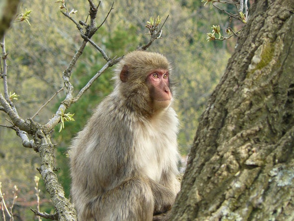 Can Monkeys and Apes Be Introverts?