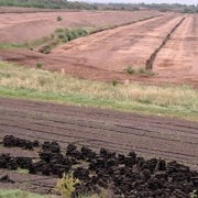 How the Loss of Peat Lands Affects Greenhouse Gas Buildup